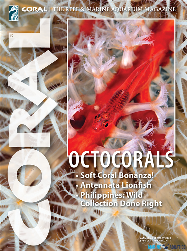 "Časopis CORAL - ""OCTOCORALS"" (JAN-FEB20)"